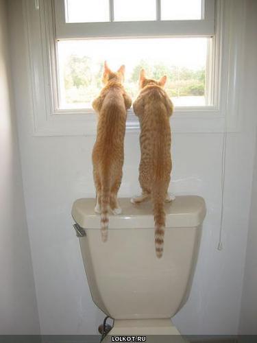 Два кота окна