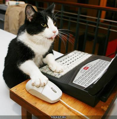 Кот и компьютер картинки