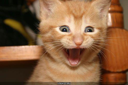 Кот радостный фото