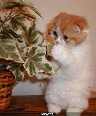 маскировка рыжего котенка