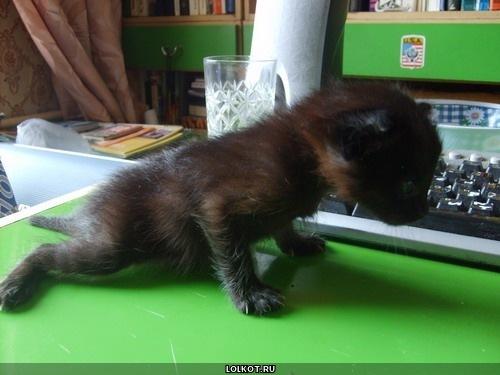 спортивный черный котенок