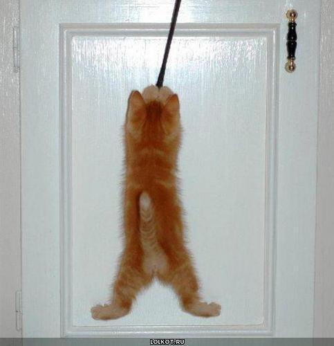 кот висит на двери
