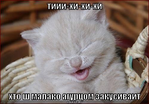 http://lolkot.ru/wp-content/uploads/2008/06/467a9187397ed82d8af5dcdvg9.jpg
