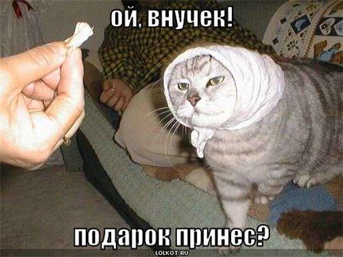 http://lolkot.ru/wp-content/uploads/2008/06/vnuchek.jpg