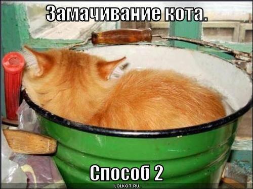 замачивание кота