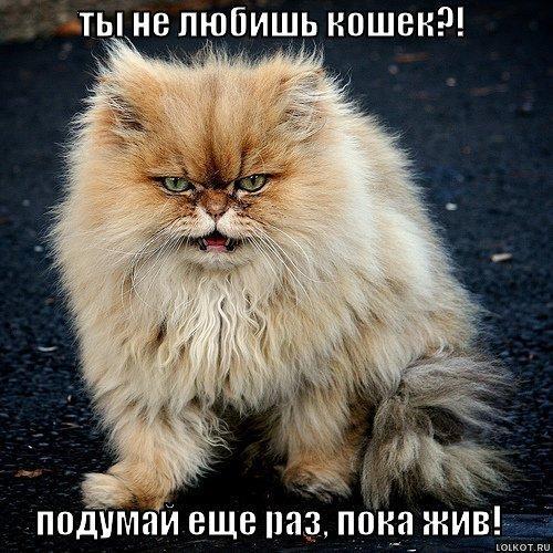 ты кошка: