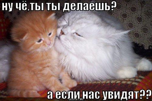 a-yesli-nas-uvidyat_1258544304.jpg