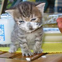 Кормежка котенка