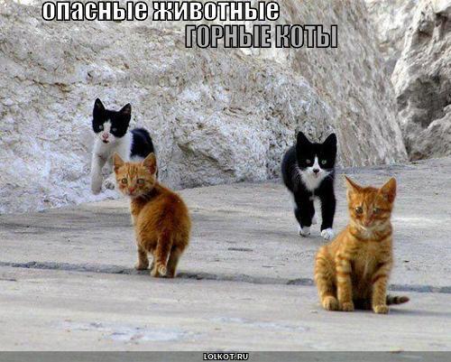 Опасные животные горные коты