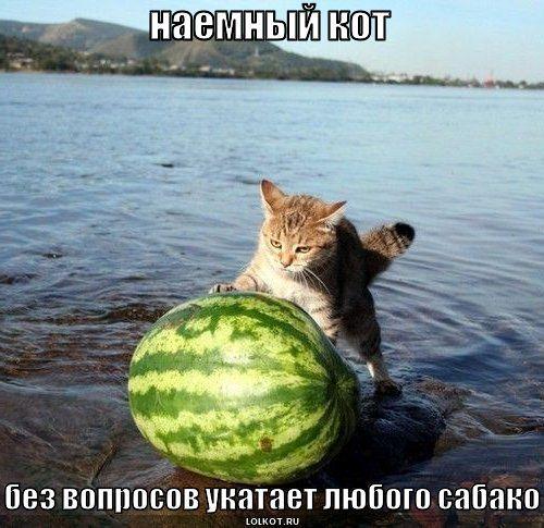 наемный кот