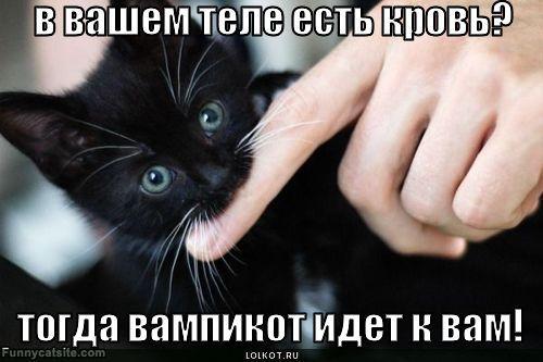 лучше отводит как отучить маленького котенка кусатся комфорт даже