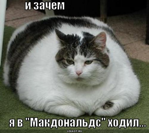 http://lolkot.ru/wp-content/uploads/2010/03/makdonalds_1268285771.jpg
