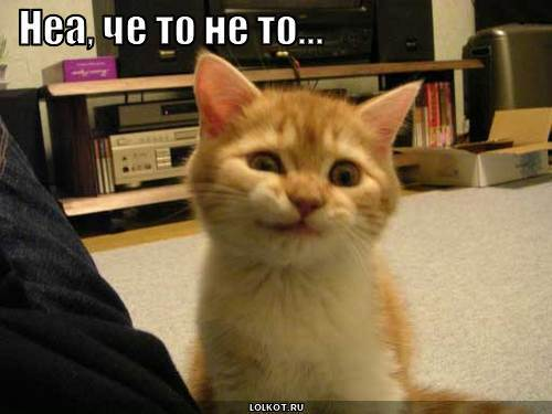 http://lolkot.ru/wp-content/uploads/2010/05/chto-to-ne-to_1273808612.jpg