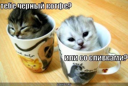 http://lolkot.ru/wp-content/uploads/2010/05/kotfe_1275049184.jpg