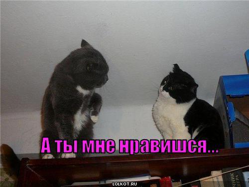 1 6 ты:
