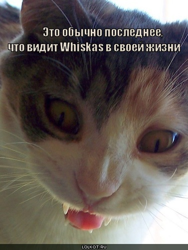 жизнь Whiskas