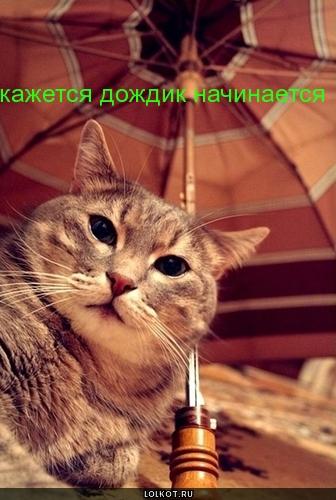 дождик начинается