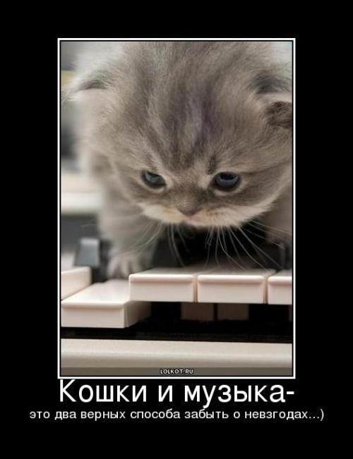 Кошки и музыка это два верных способа