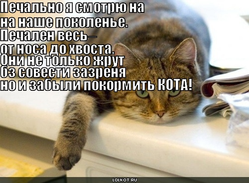 кот-критик