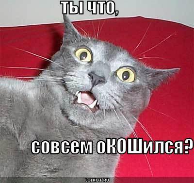 котовий сленг