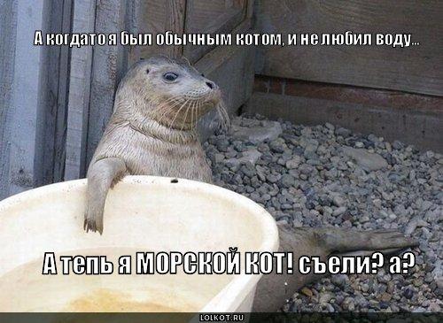 морской кот