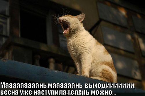 http://lolkot.ru/wp-content/uploads/2010/06/vesna-nastupila_1277135311.jpg