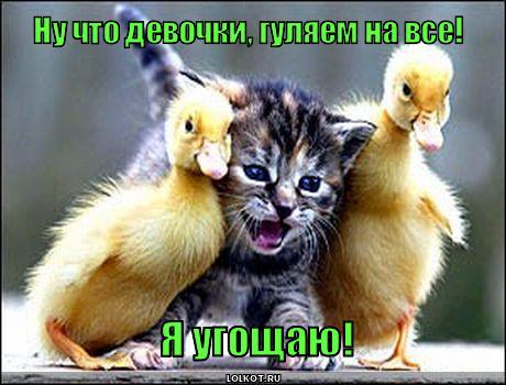 http://lolkot.ru/wp-content/uploads/2010/07/gulyayem-na-vse_1279857558.jpg