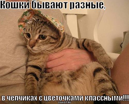 Кошки бывают разные в чепчиках с