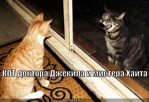 кот доктора джекила