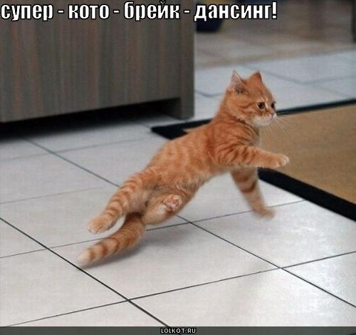 Котоматрица: Хозяин мой танцует брейк, Ведь все