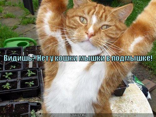 myshki-v-podmyshke_1279304179.jpg