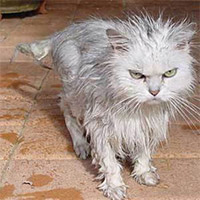 Злой мокрый кот