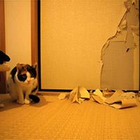 Кот порвал обои