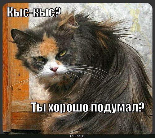 kys-kys_1280978279.jpg