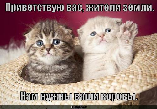 nam-nuzhny-korovy_1280853376.jpg