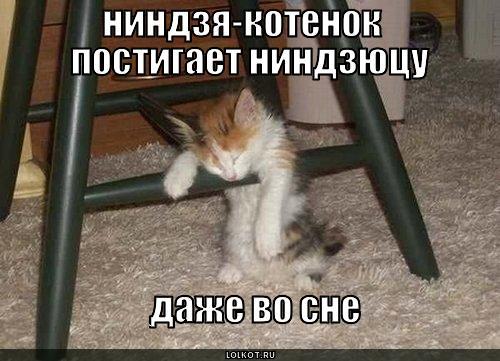https://lolkot.ru/wp-content/uploads/2010/08/nindzya-kotenok_1283004901.jpg