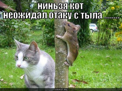ниньзя кот неожидал