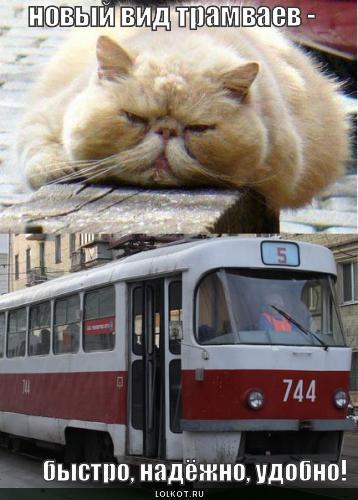 novyy-vid-tramvayev_1282146446.jpg