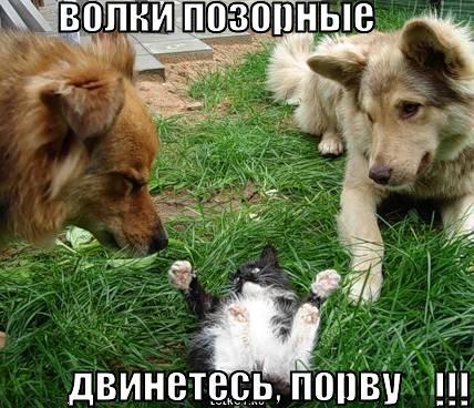 volki-pozornyye_1280773512.jpg