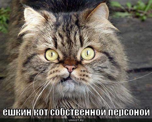 ёшкин кот собственной персоной
