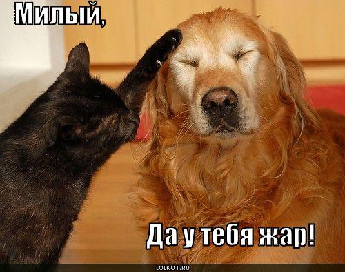 zhar_1282413389.jpg