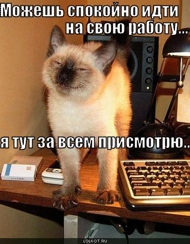 http://lolkot.ru/wp-content/uploads/2010/09/mozhesh-idti_1283444912.jpg