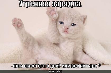 http://lolkot.ru/wp-content/uploads/2010/09/utrennyaya-zaryadka_1283520507.jpg