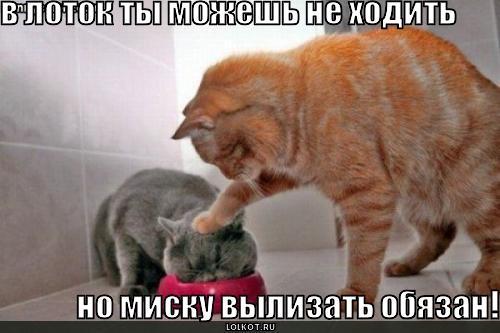 http://lolkot.ru/wp-content/uploads/2010/09/vylizat-obyazan_1283576394.jpg