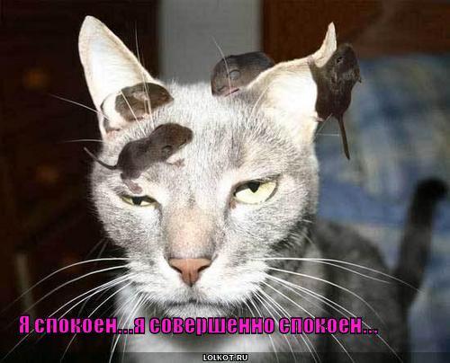 http://lolkot.ru/wp-content/uploads/2010/09/ya-spokoyen_1285849471.jpg