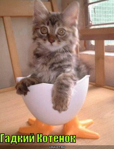 Кошек с надписями sfw — приколы юмор