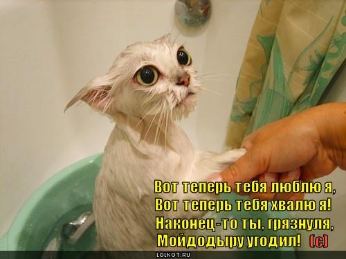 http://lolkot.ru/wp-content/uploads/2010/10/gryaznulya_1288145104.jpg