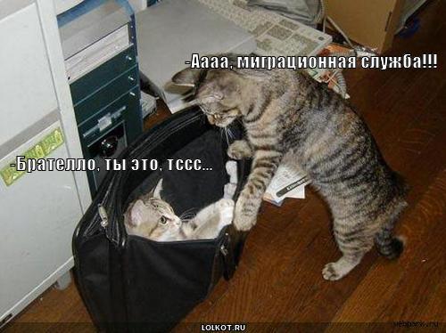 migratsionnaya-sluzhba_1287209685.jpg