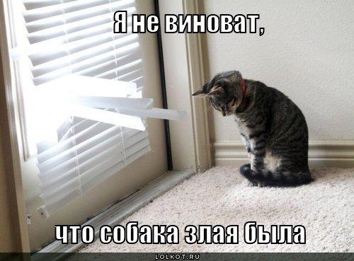 мяу котики игры