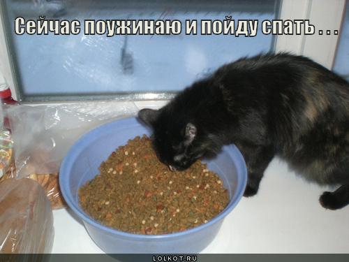 сейчас поужинаю